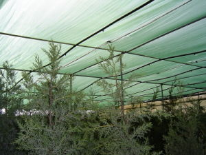 Sunshade Net Anti Sun Net for Protection Agriculture Nersury pictures & photos