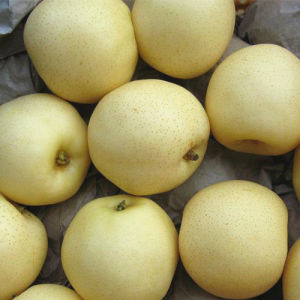 Fresh New Season Golden Pear/Crown Pear pictures & photos