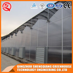 Commercial Steel Structure Polycarbonate Sheet Greenhouse for Flower pictures & photos