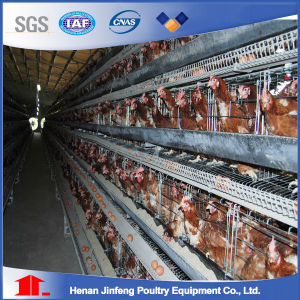 Hot Sell H Type Automatic Chicken Cage System From Jinfeng Poultry Equipment pictures & photos