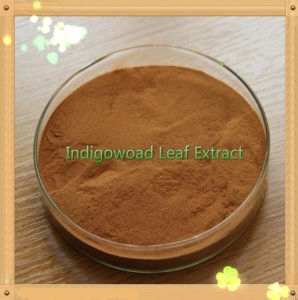 Indigowoad Leaf Extract / High Quality/ (CAS: 479-41-4) /Antibacterial and Antiviral