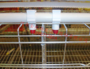 Best Price for Layer Cage with Poultry Feeder and Drinker pictures & photos