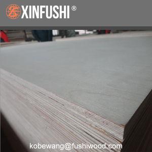 Big Size Birch Plywood for Australia Market pictures & photos