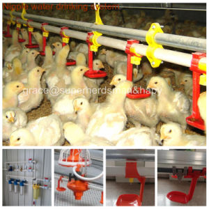 Poultry Farming Equipment for Broiler Production pictures & photos