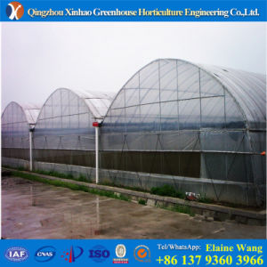 Double Layer Film Agricultural Green House for Tomato pictures & photos