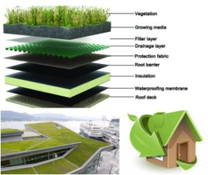 Manufacturer Supply Torch on Sbs Modified Bitumen Waterproof Membrane for Green Roof pictures & photos