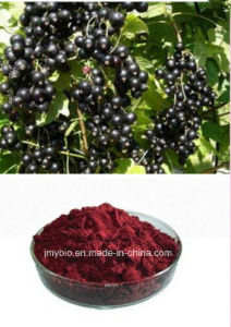 Hot Selling Natural Black Currant Extract Anthocyanins 10%, 25% pictures & photos
