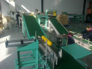 Belt/ Roller/ Stainless Steel Conveyor with CE pictures & photos