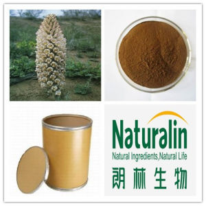 Herbal Cistanches Extract (Desertliving Cistanche Extract)