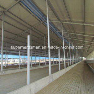 High Quality Prefab Steel Poultry Shed and House pictures & photos