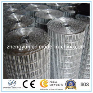 Wholesale Welded Wire Mesh, Galvanized Welded Wire Mesh pictures & photos