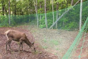 Deer Exclusion Fence