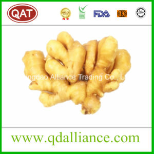 Fresh Ginger Exporting to North America pictures & photos