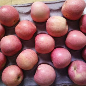 Selected Quality FUJI Apple Competitive Price pictures & photos