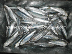 Sardine Fish for Canned pictures & photos