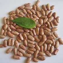 Exporting Grade Light Speckled Kidney Bean 200-240/G pictures & photos
