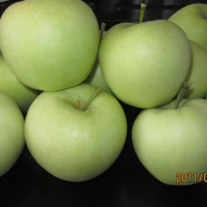 Export Standard Chinese Fresh Golden Apple pictures & photos
