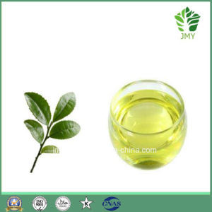 Natural Tea Tree Aromatherapy Body Massage Oil pictures & photos