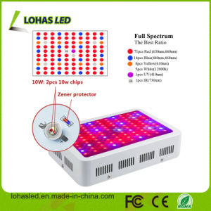 Apollo Horticulture Lighting 300W 600W 800W 900W 1000W Full Spectrum LED Grow Light for Greenhouse/Hydroponics/Plants Growing pictures & photos