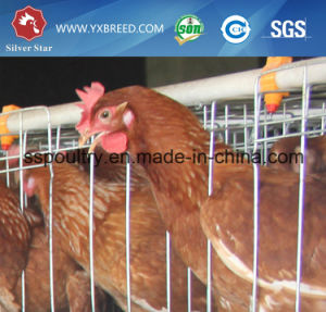 Poultry Cages Prices Chicken Farm Equipment for Nigeria pictures & photos