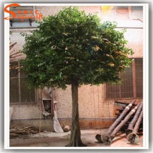Fiberglass Artificial Ficus Tree for Restaurant Decoration pictures & photos