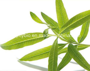 Antioxidant Lemon Verbena Extract, Lemon Balm Leaf Extract, Rosmarinic Acid pictures & photos