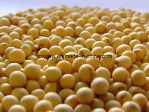 Pure Natural Soy Isoflavones Soybean Extract pictures & photos