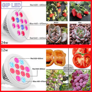 Best Seller 12W 24W E27 LED Grow Lights for Home Plants pictures & photos