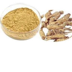 Dong Quai Extract, Angelica Root Extract Ligustilide pictures & photos