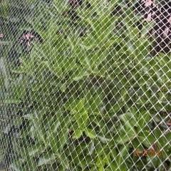 Plastic Net / Plastic Flat Net / Plastic Fencing Net pictures & photos