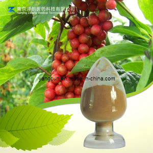 Kosher 1% to 9% Natural Schisandrins Schisandra Extract pictures & photos
