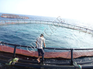 Aquaculture Cages for Fish Farming in Volta Lake pictures & photos