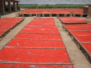 Fresh 5kg Bag Packing 100% Natural Certified Organic Goji Berries pictures & photos