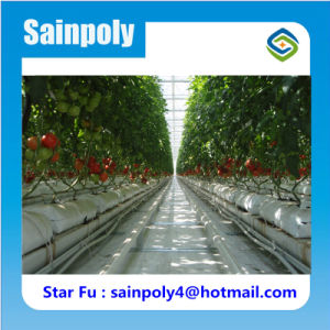 Factory Supplier Agricultural Type Hydroponic Greenhouses pictures & photos