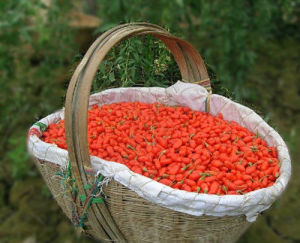 Dried Goji Berries From Ningxia (350grains per 50g) pictures & photos