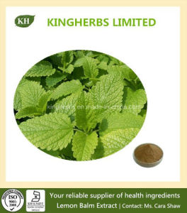 Lemon Balm Extract 1%, 5% Rosmarinic Acid Melissa Officinalis Extract pictures & photos
