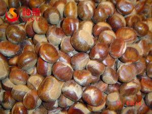 New_Crop_Fresh_Chestnuts_Origin_Hebei