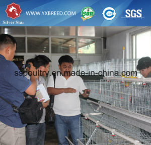 Hot DIP Galvanized Chicken Cage / Bird Cage for Layer pictures & photos