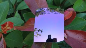 Polarized Tac Replacement Lens Sunglass Lens (R White Purple) pictures & photos