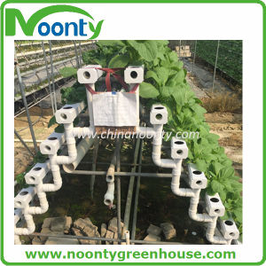 Vertical Hydroponics System for Lettuce, Herbs, Tomato, etc pictures & photos