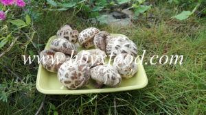 Dried Flower Mushroom, Hubei Shiitake Mushroom pictures & photos