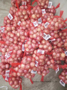 Fresh Shallot with High Exporting 2017 Quality pictures & photos
