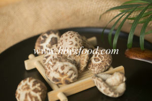 Yongxing Food 2-3cm Autumn Plant Tea Flower Mushroom pictures & photos
