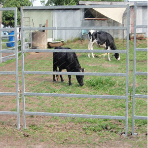 Galvanized Farm Livestock Panel Fence / Cattle Panels pictures & photos
