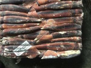 Argentine Sea Illex Squid for Bait pictures & photos