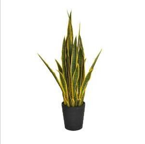 Artificial Plants and Flowers of Sancevieria pictures & photos