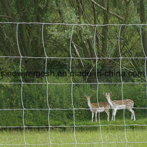 Sailin Field Fence Deer Fence pictures & photos