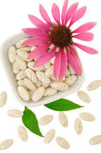 100% Natural Echinacea Purpurea Extract (high quality, fairest price) pictures & photos