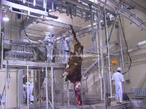 Cattle Slaughtering Machine pictures & photos