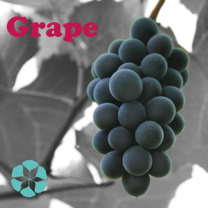 Grape Seed Extract / Vitis Vinifera Extract / Polyphenols pictures & photos